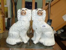 """Two Staffordshire mantle spaniels 9 3/4"""" tall, gilt well rubbed, some hairline cracks."""