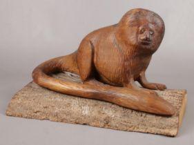 An Oak sculpture of a Golden Lion Tamarin (Monkey) on a slice of tree trunk. H: 23cm, W: 34cm.