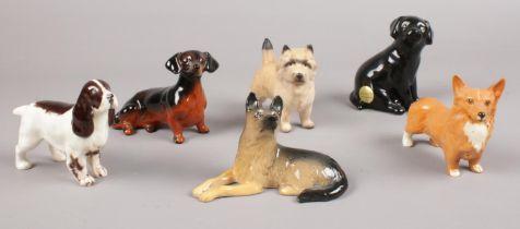 A group of Beswick dog figures. Black Labrador puppy, Dachshund, German Shepherd puppy, Brown