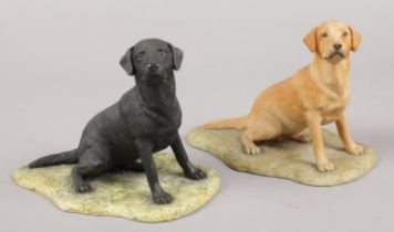 Two Border Fine Art models of Labradors by Ray Ayres. Good condition.