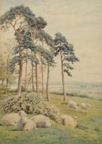 William Sidney Cooper (British 1854-1927) Sheep in a wooded rural landscape, watercolour.