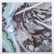 J.P.Millward, 'The Last Drop', painted using tinting graphite watercolour paper, 46cm x 46cm,