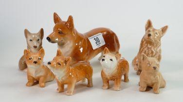 A collection of 7 Sylvac & Similar Corgi Dog figures: tallest 12cm(7)