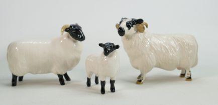 Beswick Black Faced Ram 301, Sheep 165 Lamb 1828(3)