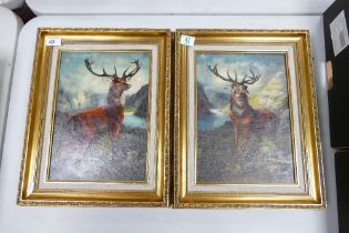 Two Framed Pictures of Stags: signed Evans(2)