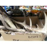 A box containing antlers and horns