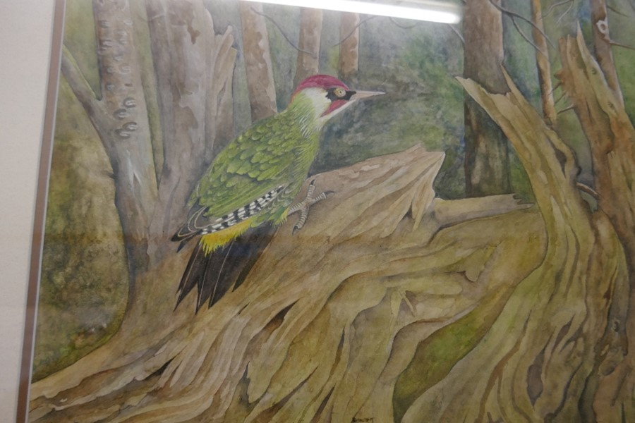 Terence Balm a watercolour of a woodpecker amongst trees 45x64.5cm - Image 4 of 4