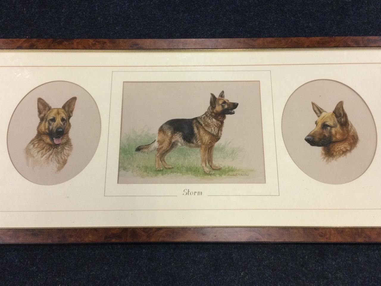 Elizabeth Halstead, watercolours, three studies of an alsation named Storm, signed, mounted and