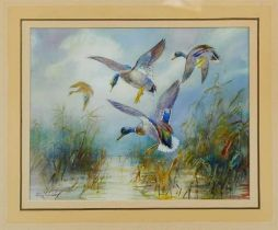 William E. Powell (1878 - 1955), watercolour - mallards coming in, entitled - 'Pitching', signed, in