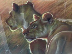 Mark Blue, contemporary, pastel on paper - Two Lions, signed, 38cm x 55cm, in glazed frame