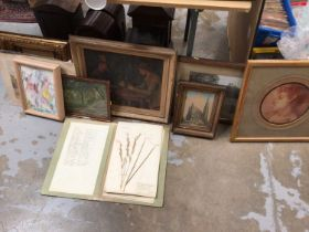 Box of pictures and prints, together with a folder of pressed common grass and weed specimens