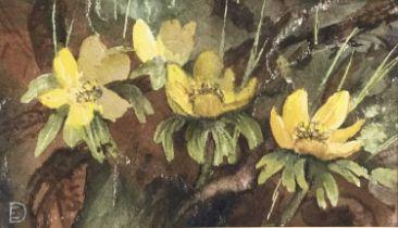 Evangeline Dickson (1922-1992) watercolour - flowers, together with another watercolour of flowers