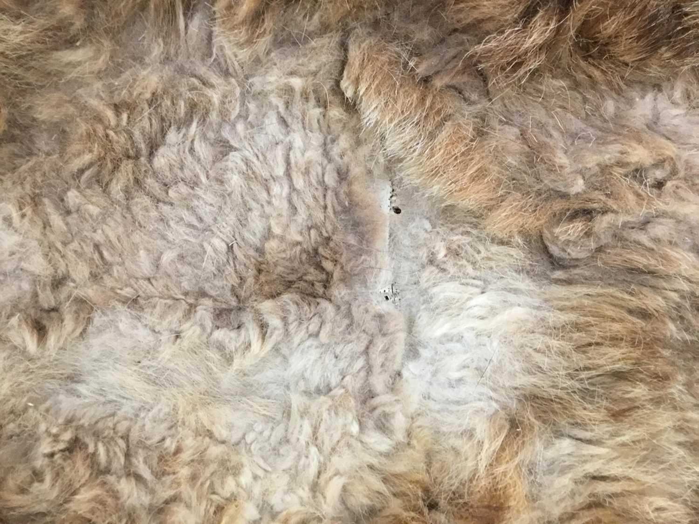 Unusual Scottish wild cat rug, with felt backing, approximately 145 x 105cm - Image 4 of 4
