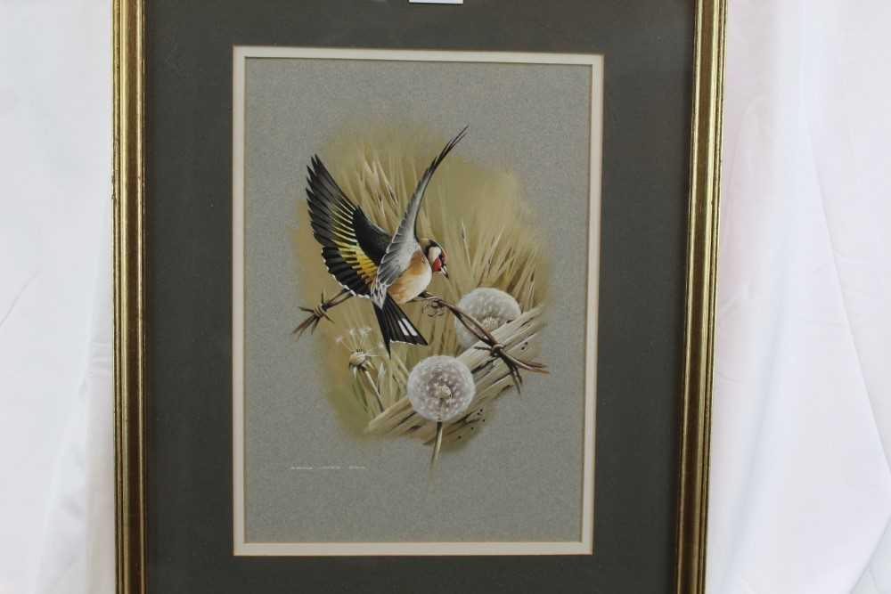 Terence Bond - bullfinch