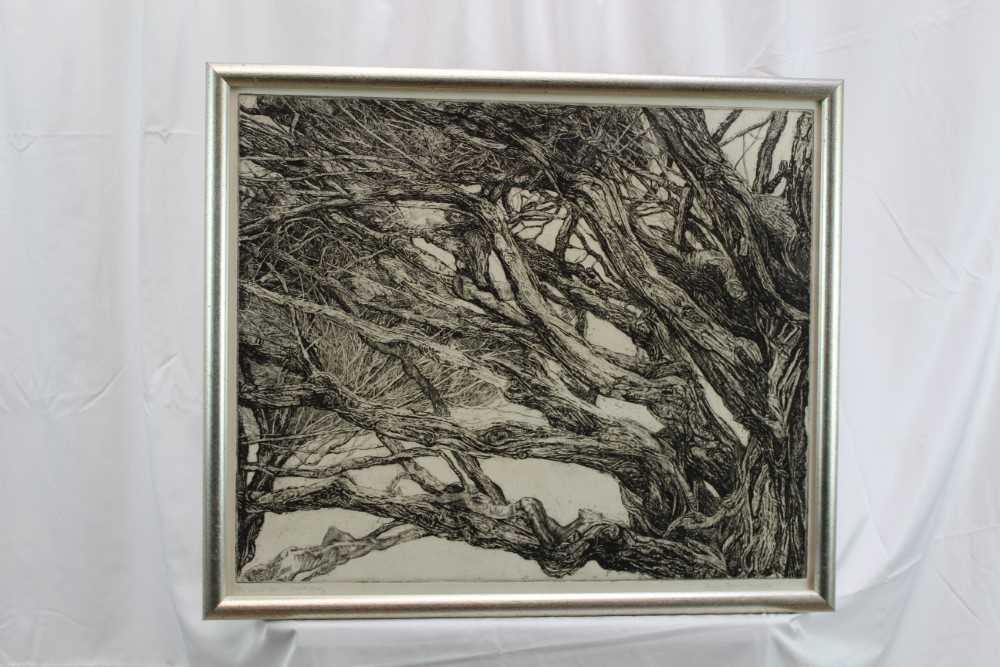Patricia Tobacco Forrester (1940-2011) signed artist's proof etching - The Ekman Tree, circa 1970, i - Image 2 of 5