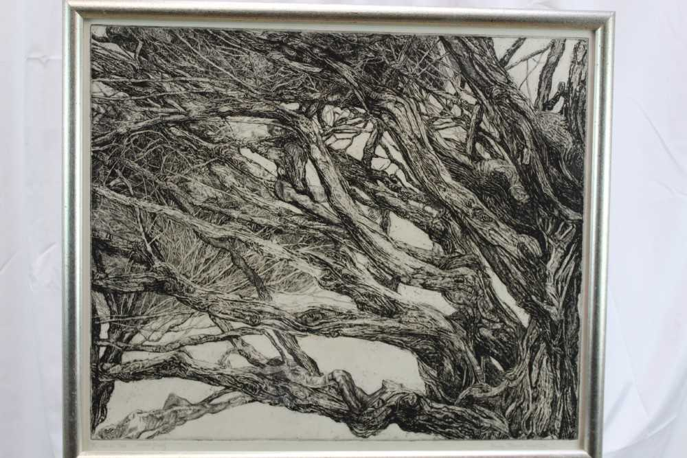 Patricia Tobacco Forrester (1940-2011) signed artist's proof etching - The Ekman Tree, circa 1970, i