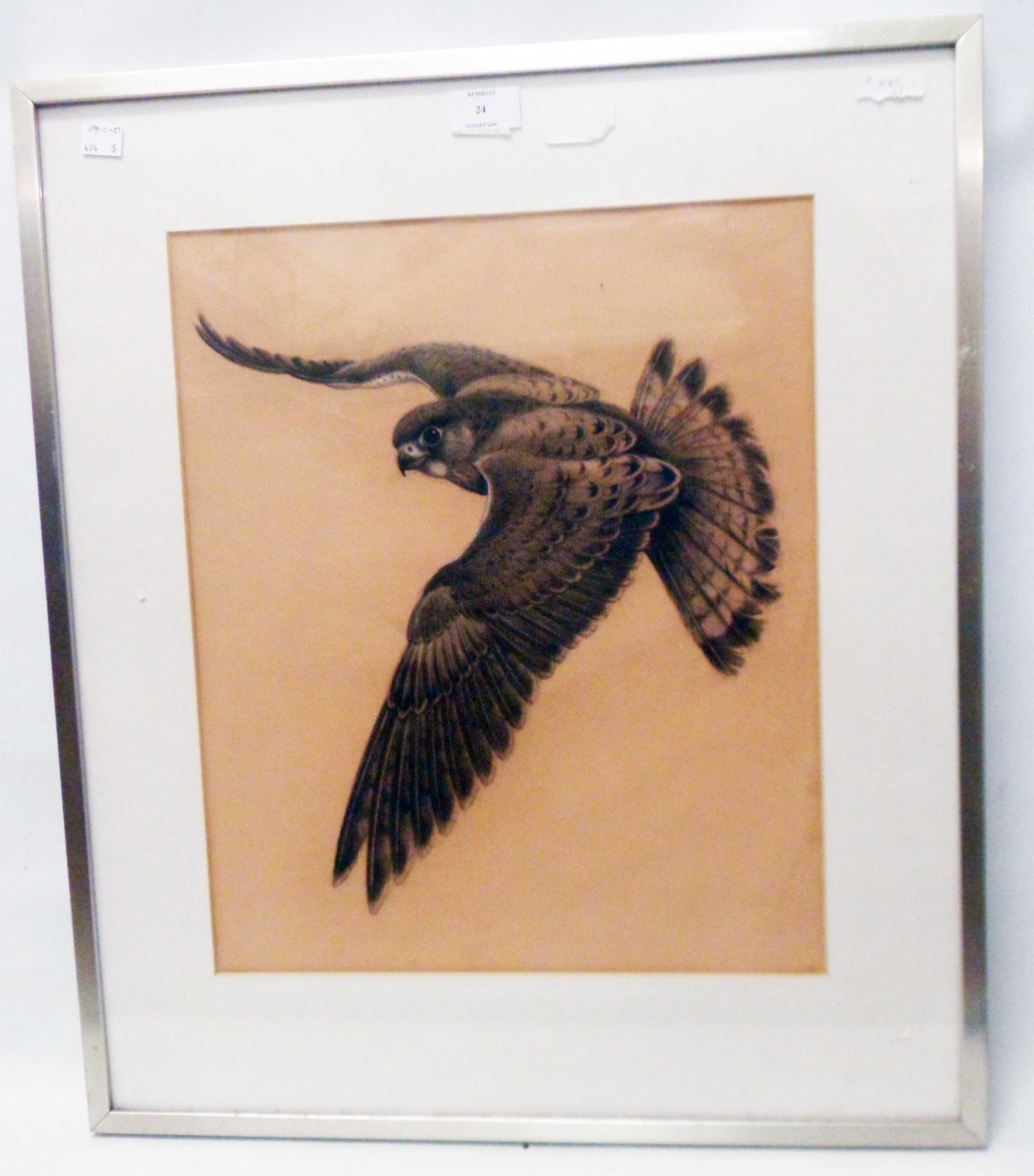 A framed mixed media drawing, depicting a hawk in flight