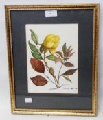 Constance West: a gilt framed watercolour, depicting flowers and foliage - signed