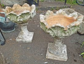 A pair of old terracotta garden urns of acanthus leaf form on tapered pedestal base