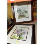 JOY CODD (BRITISH CONTEMPORARY), a pair of watercolours depicting wild flowers, signed bottom right,