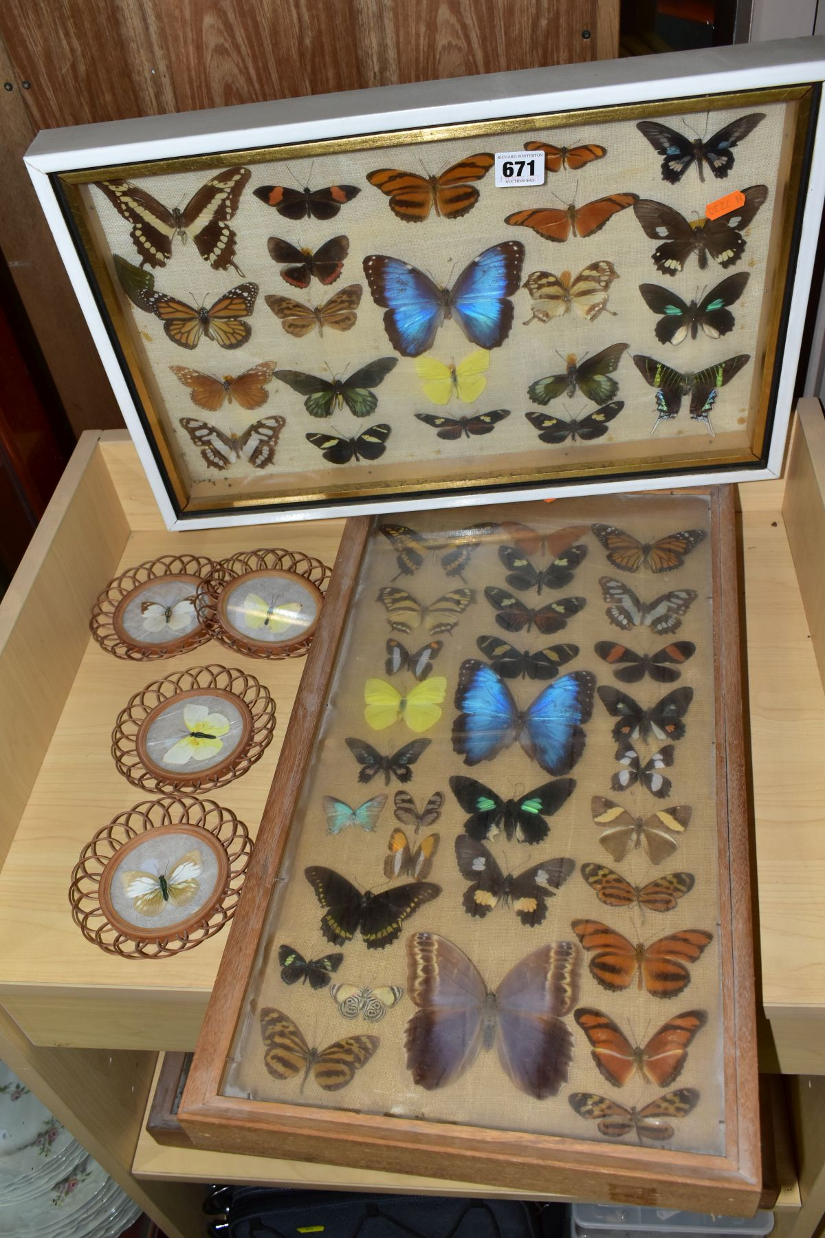 THREE DISPLAY CASES CONTAINING BUTTERFLIES AND MOTH SPECIMENS, together with four circular framed