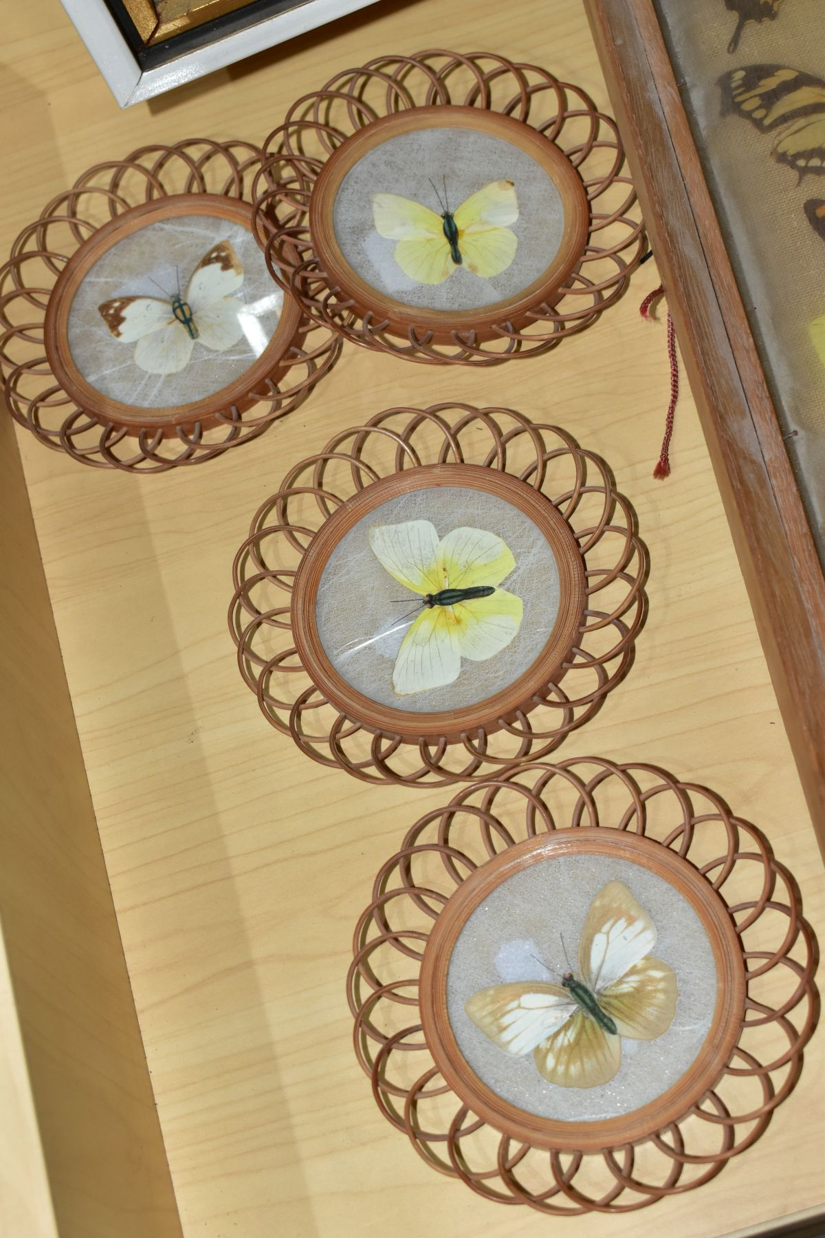 THREE DISPLAY CASES CONTAINING BUTTERFLIES AND MOTH SPECIMENS, together with four circular framed - Image 3 of 10
