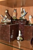 FIVE COUNTRY ARTISTS BIRD AND ANIMAL SCULPTURES, comprising CA801 'Vantage Point', boxed CA723