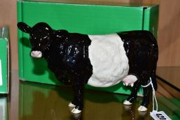 A BOXED BESWICK RARE BREED BELTED GALLOWAY COW, No 4113A designed by Robert Donaldson, Beswick crest