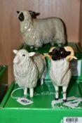 THREE BOXED BESWICK RARE BREED SHEEP, comprising 'Cotswold Sheep' No 4122, 'Wensleydale Sheep' No