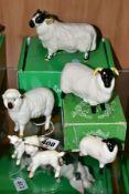 SIX BESWICK SHEEP, comprising sheep No 935, two lambs No 937 and 938, boxed Black Faced Sheep No