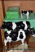 BESWICK FRIESIAN CATTLE, comprising boxed Bull Ch. Coddington Hilt Bar, No.1439A, gloss, Cow Ch.