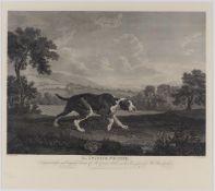 After William Woollett, British 1735-1785- The Spanish Pointer, after George Stubbs ARA; restrike