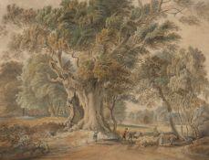 Circle of Paul Sandby RA, British 1731-1809- Ancient Beech Tree, Windsor Great Park; pencil,