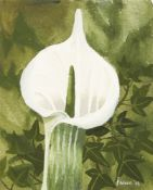 Mary Fedden OBE RA PPRWA, British 1915-2012- Single Flower Stem, 2006; watercolour, signed and