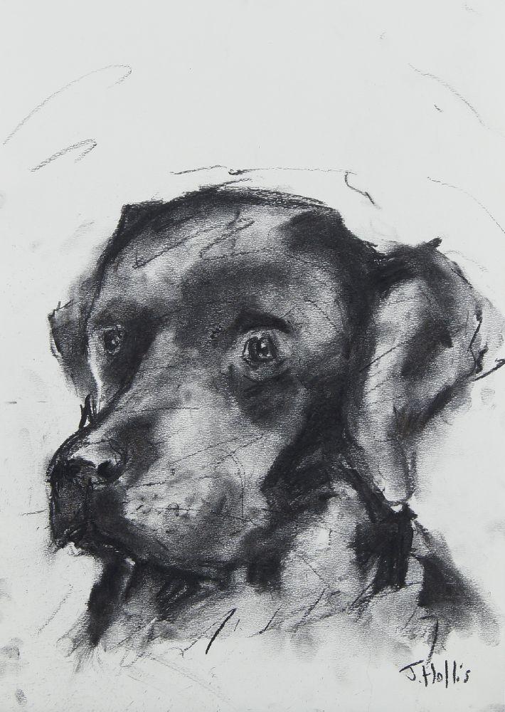 J Hollis, British, late 20th/early 21st century- Portrait of Labrador Retriever; charcoal on