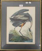 Great Blue Heron, print, framed and glazed. 30.5 x 40.5 cm.