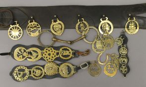 A quantity of horse brasses and straps. The largest strap 144 cm long.