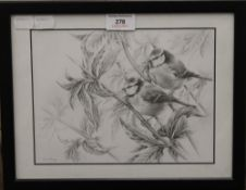 ANN BIGGS (20th/21st century) British, Blue Tits on Buddleia, pencil sketch, signed,