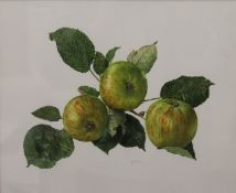 B GILLESPIE, Still Life of Apples, watercolour, signed and dated 1991, framed and glazed. 28.5 x 23.