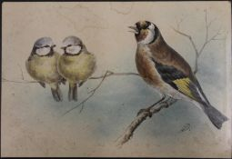 A 19th century watercolour, Two Blue Tits and a Goldfinch, indistinctly initialled,