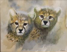 CHARLES CLIFFORD TURNER (1920-2018) British, Cheetah Cubs, watercolour, signed, framed and glazed.