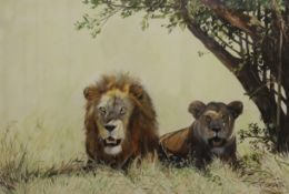 CHARLES CLIFFORD TURNER, Lion and Lioness, watercolour, signed, framed and glazed. 53.5 x 36 cm.