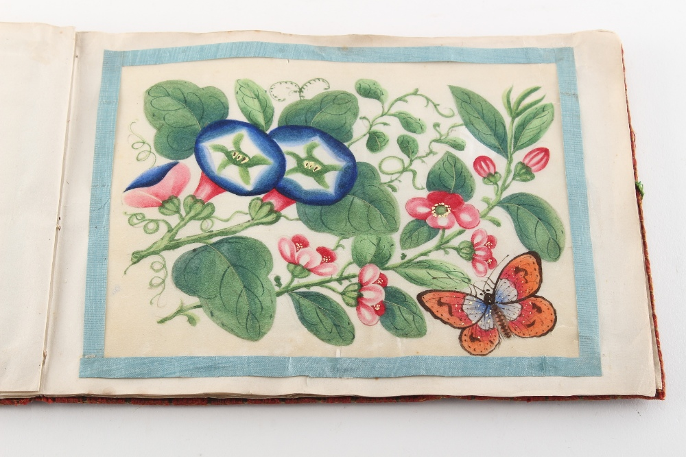 A complete album of twelve 19th century Chinese paintings on pith paper depicting butterflies & - Image 3 of 4