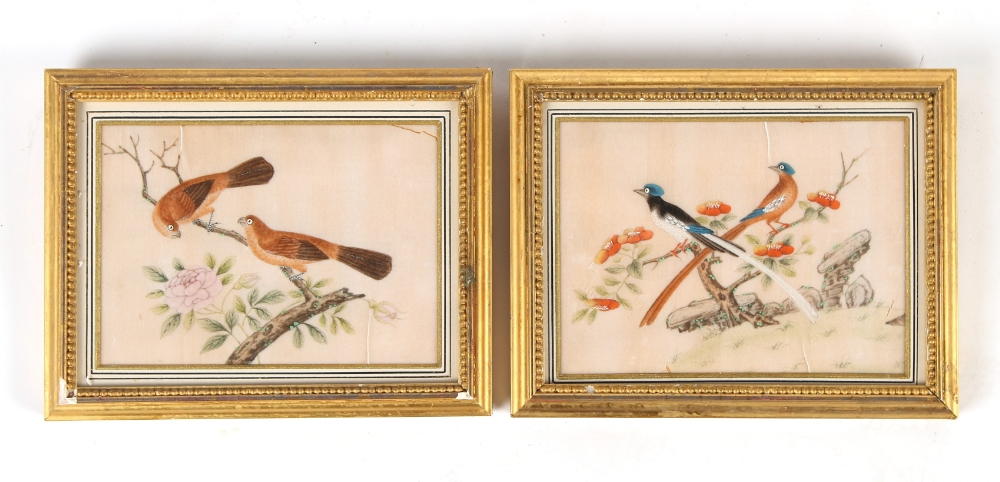 Property of a lady - a pair of 19th century Chinese paintings on pith paper depicting birds in
