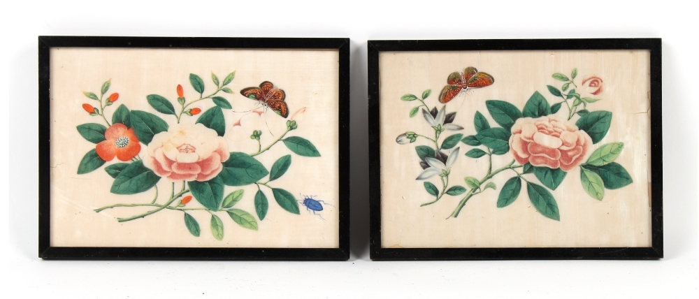 Property of a gentleman - two 19th century Chinese paintings on pith paper depicting butterflies &