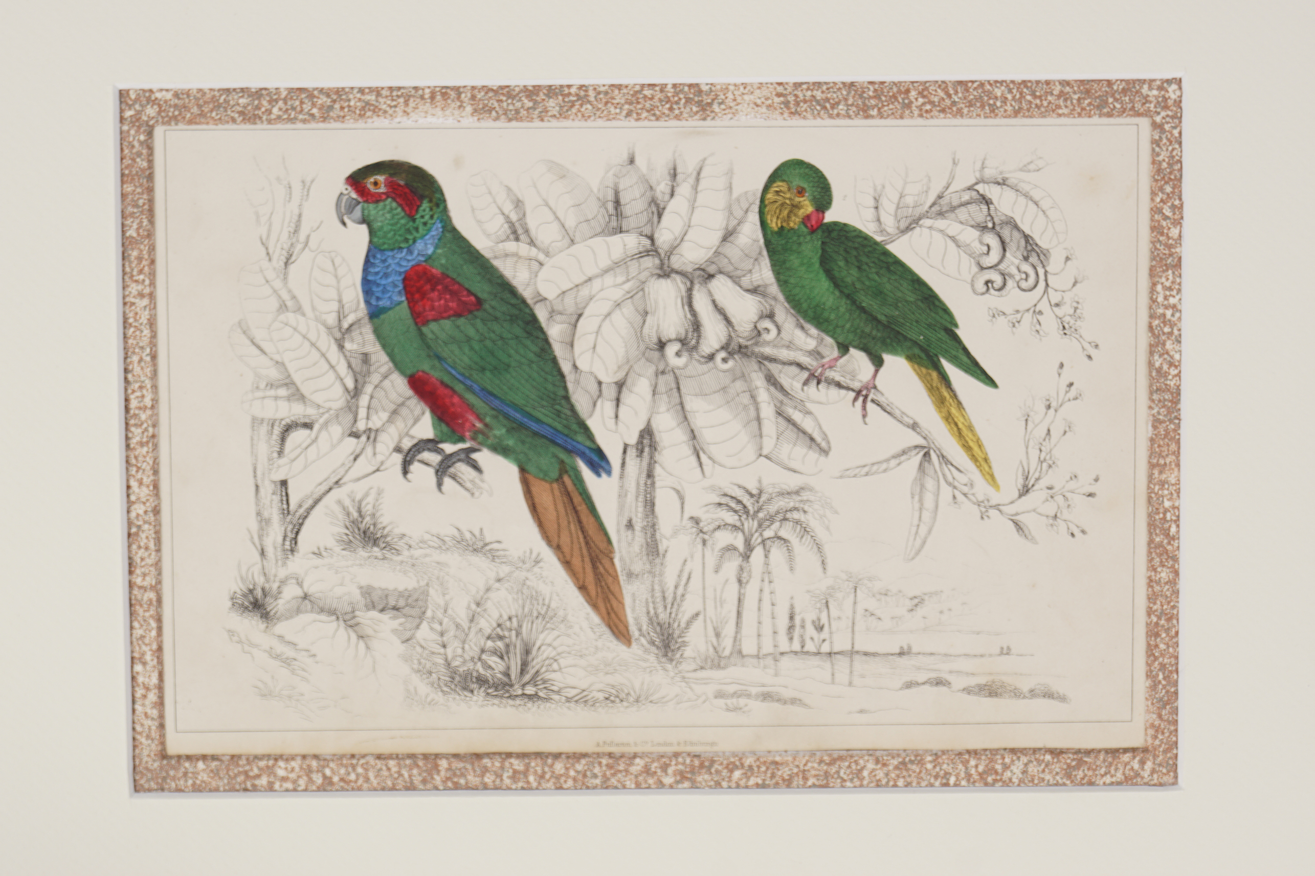 SET OF 4 18TH-CENTURY HAND COLOURED PRINTS - Image 2 of 5