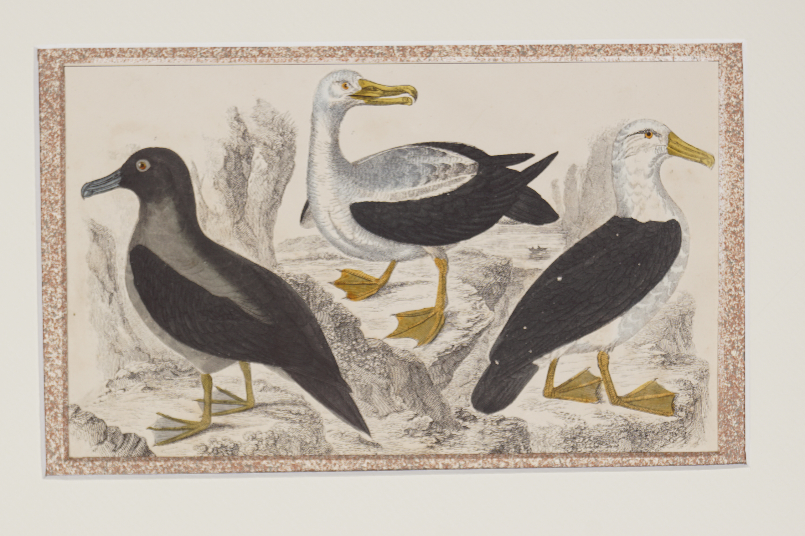 SET OF 4 18TH-CENTURY HAND COLOURED PRINTS - Image 4 of 5