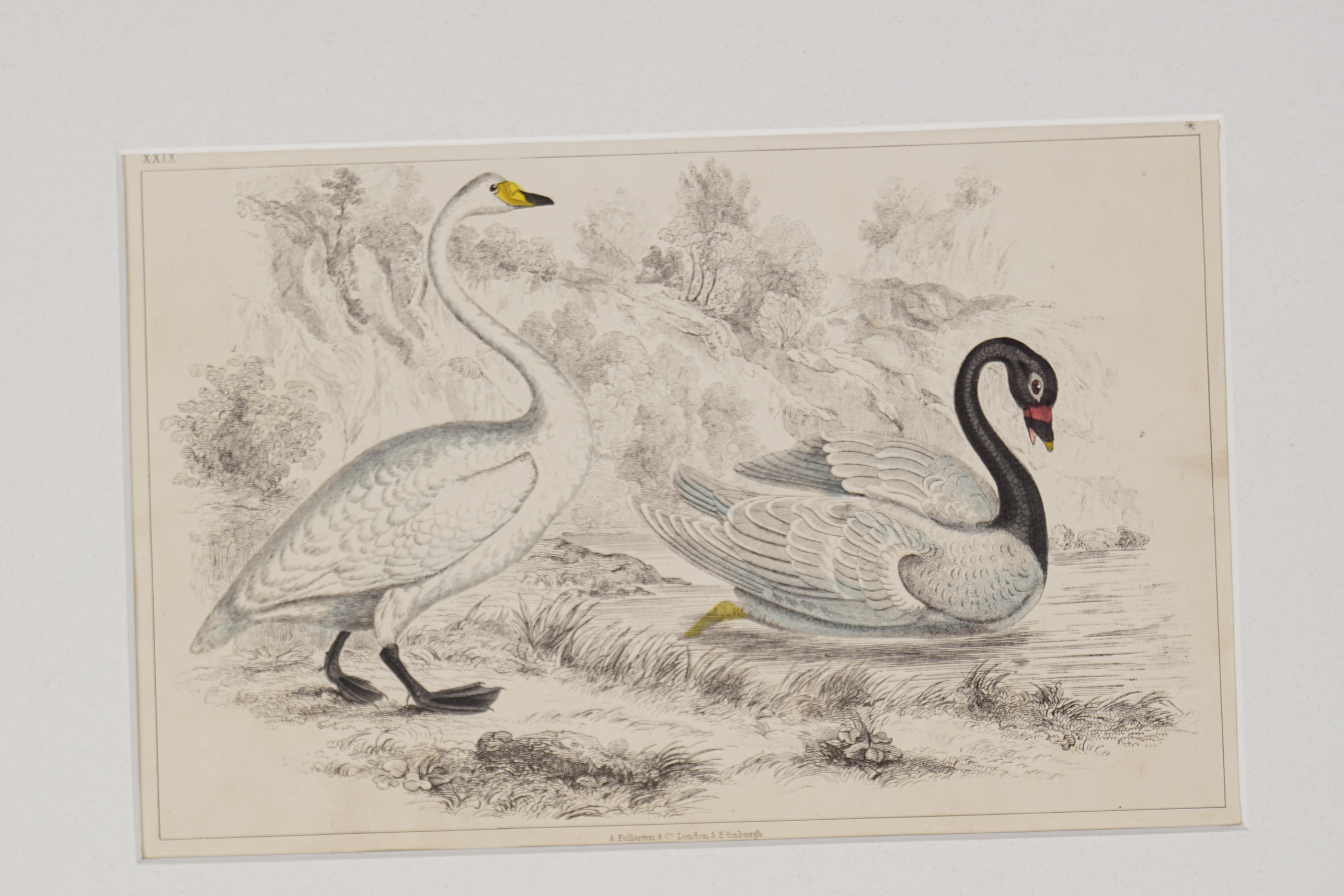 SET OF 4 18TH-CENTURY HAND COLOURED PRINTS - Image 5 of 5