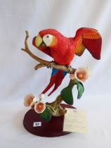 Border Fine Arts 'Scarlet Macaw' - Richard Roberts,