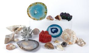 A natural history enthusiast's collection of crystals and marine life, to include an aventurine